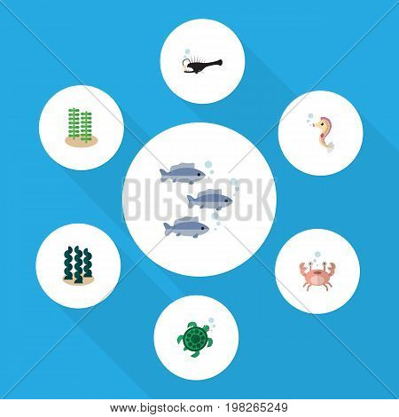 Flat Icon Marine Set Of Alga, Tortoise, Hippocampus And Other Vector Objects