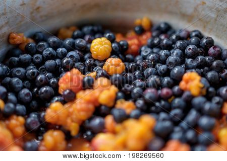 Bowl with cloudberries and northern bilberries. Fresh berries for vegetarians
