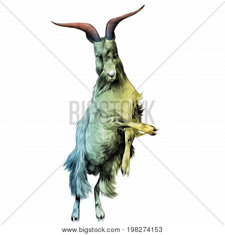 sheep in full growth stands on his hind legs in the jump dance sketch vector graphics color drawing of a colored gradient from green to yellow