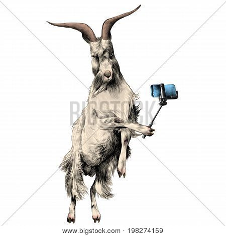sheep in full growth stands on his hind legs in the jump dance and posing for photos being photographed with a monopod on the phone takes selfie sketch vector graphics color picture