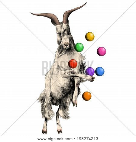 sheep is on its hind legs in a circus and juggles with balls sketch vector graphics color picture