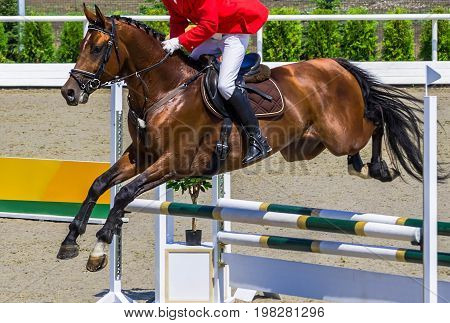 Bay dressage horse and rider in red jacket performing jump at show jumping competition. Equestrian sport background. Bay horse portrait during dressage competition.