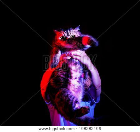 A man is holding his domestic cat in his hands on a black background in neon light