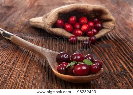 Ripe delicious cranberries in burlap bag on rustic wooden table. Healthy fruit eating.