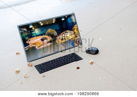 Sea turtle in the computer screen on the beach Marine Conservation concept.