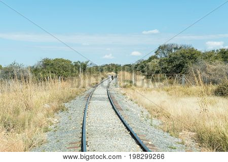 Chacma baboons on the railroad tracks between Kombat and Grootfontein in the Otjozondjupa Region of Namibia