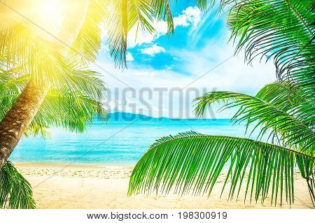 Beautiful beach. View of nice tropical beach with palms around. Holiday and vacation concept. Tropical beach. Beautiful tropical island