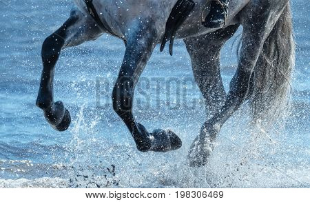 Grey horse run gallop on water. Legs of horse close up into sea with splashes.