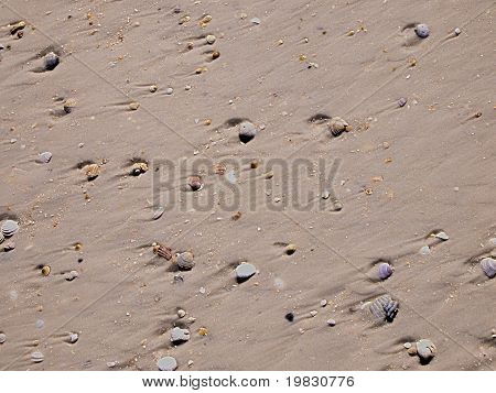HDR sandy beach with shells, background