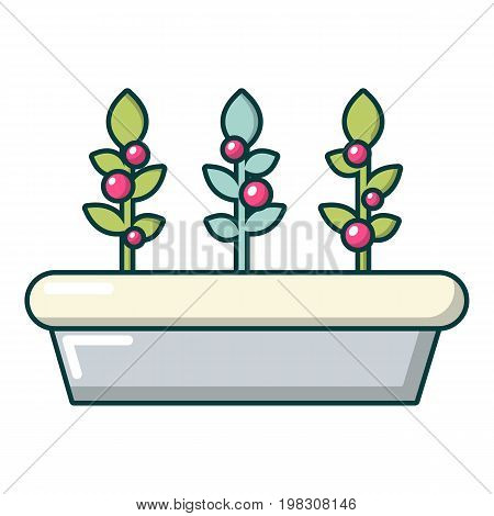 Outdoor potted plants icon. Cartoon illustration of outdoor potted plants vector icon for web design