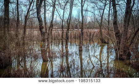 Sakarya Turkey - January 19 2013: Acarlar floodplain longoz forest in Sakarya Turkey