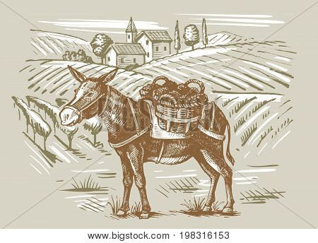 vector vintage hand drawn illustration of wineyard and a donkey