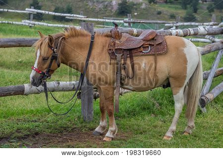 Horse With Beautiful Saddle 2