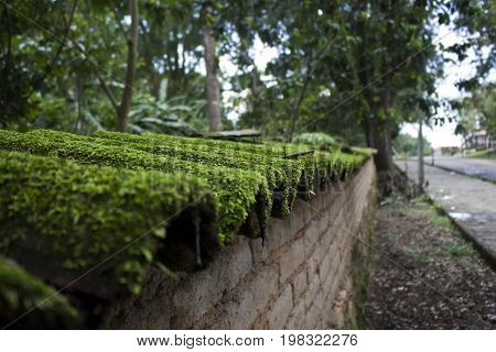Moss covered shingles on a wall in San Sebastian Jalisco Mexico.