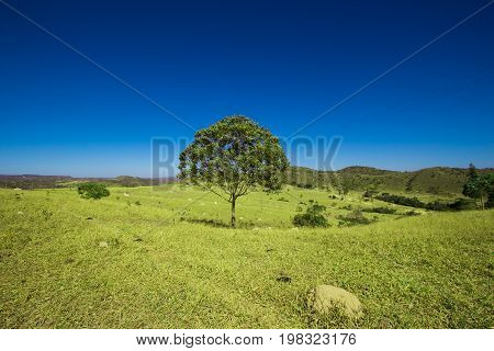 Tree In The Middle Of The Mountains