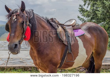 Saddled Horse Ready For Riding