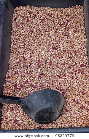Farmers Market Colorful Beans