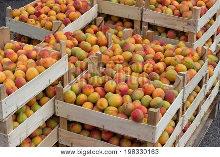Farmers Market Organic Apricots In A Wooden Crates 2