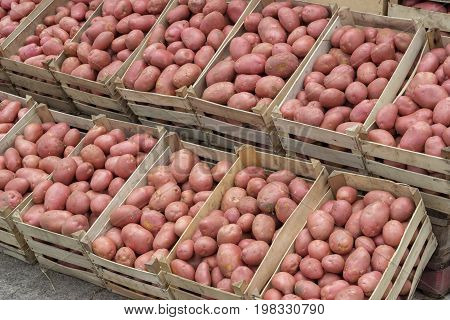 Farmers Market Potatoes In A Wooden Crates