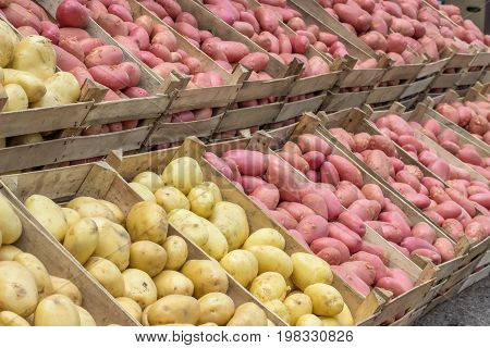 Farmers Market Potatoes In A Wooden Crates 2