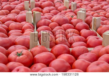Farmers Market Tomato In A Wooden Crates