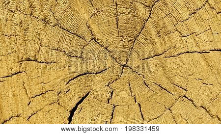Natural wooden texture with rings and cracks pattern close up