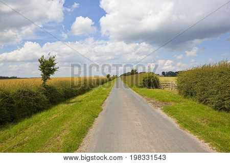 Country Road And Hawthorn Hedgerow
