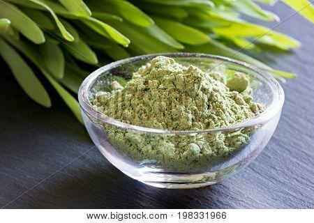 Young Barley Grass With Green Barley Grass Powder