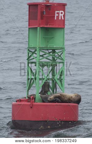 Buoy floating in the ocean with sea lions sleeping at the bottom