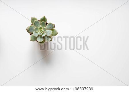 Succulent Plant, Mini Cactus On White Background -