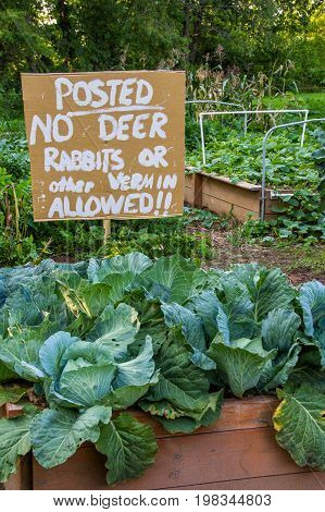 Funny sign in raised-bed garden to help keep deer and other critters away. poster