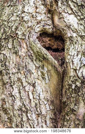 A heart-shaped hole in this tree appears to be