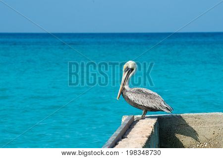 Pelican stands on a pier with a beautiful exotic blue sea. A tropical serene pier scene with the Caribbean Sea