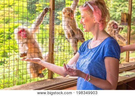 Young happy woman eating at Japanese macaque inside popular Iwatayama Monkey Park in Arashiyama, Kyoto, Japan. Tourist enjoys interaction with Macaca Fuscata monkey. Leisure and tourism concept.