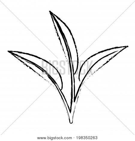 blurred silhouette of leaves lanceolate vector illustration