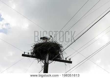 one 1 fledgling Hatchling wild stork a bird sitting in nest against the sky with gray clouds wires