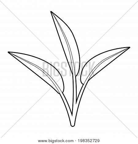 sketch silhouette of leaves lanceolate vector illustration