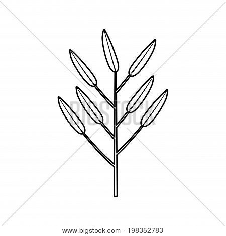 sketch silhouette of branch with leaves lanceolate vector illustration