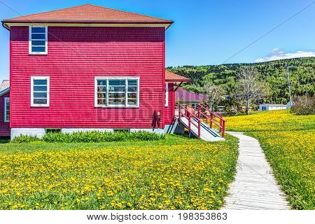 Red Painted Shed House With Yellow Dandelion Flowers In La Martre In The Gaspe Peninsula, Quebec, Ca