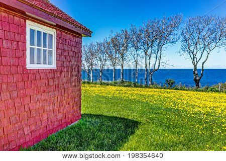 Red Painted Wooden Shed With Yellow Dandelion Flowers And View Of Saint Lawrence River In La Martre