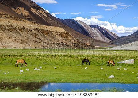 Landscape around Leh district in Ladakh, India