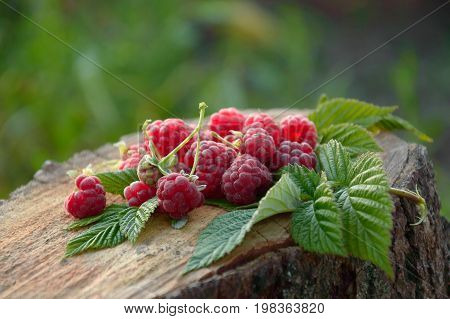 A fresh fragrant raspberry lies in the garden on the stump