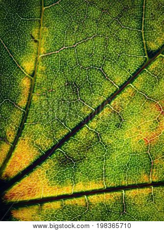 abstract nature background detail leaves of a tree backlit
