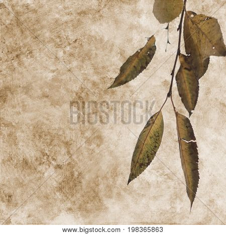 Fallen Autumn Leaf On The Abstract Paper Background
