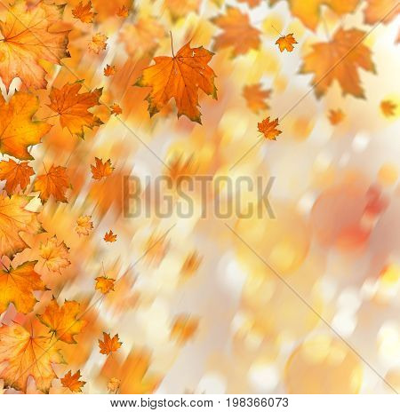 Orange Autumnal Branch Of  Tree On Abstract Background