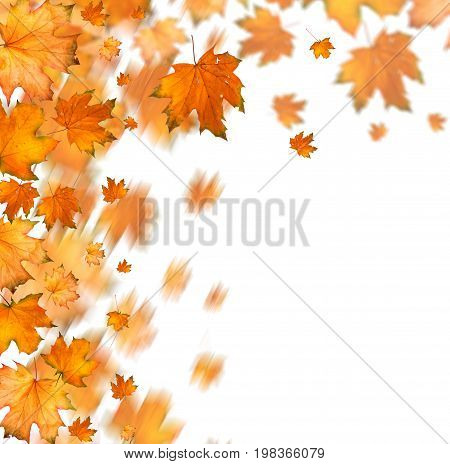 Orange Autumnal Branch Of  Tree On  Isolated Background