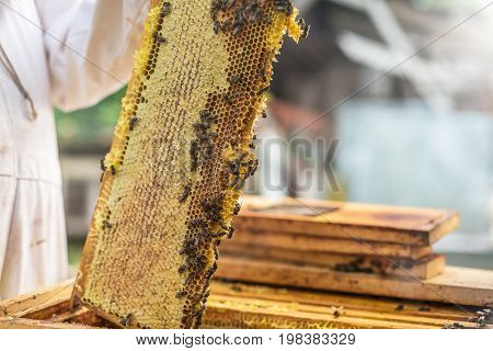 The Process Of Obtaining Honey, Raising The Wax Honey From The Hive