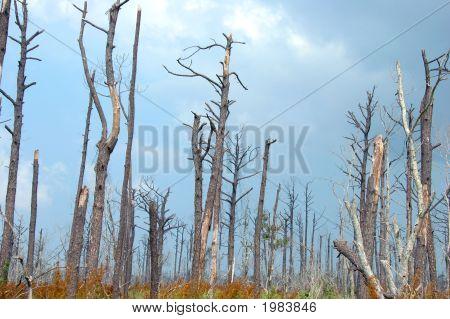Katrina Destruction