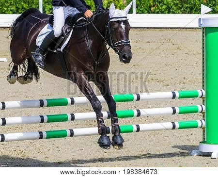 Black dressage horse and rider performing jump at show jumping competition. Equestrian sport background. Glossy black horse portrait during dressage competition.