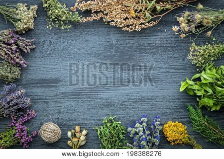 Medicinal herbs bunches on gray wooden board with copy space for text. Herbal medicine. Top view flat lay.